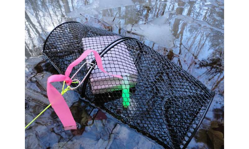 Use of glow sticks in traps greatly increases amphibian captures in study