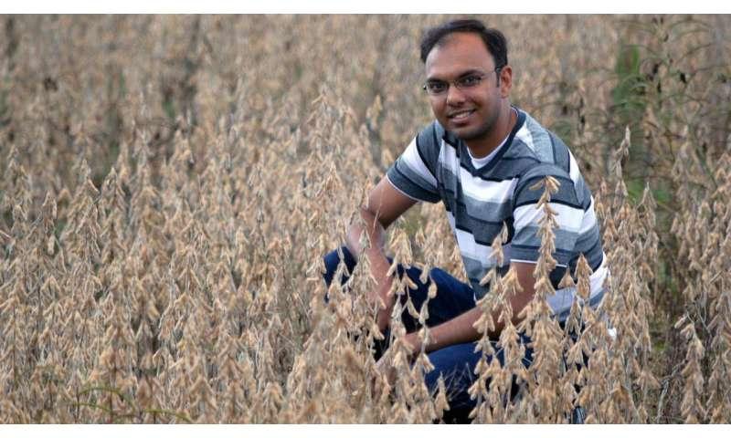 Using satellites to improve crop yield estimates
