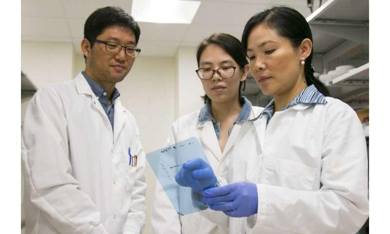 UTA study says zinc can halt the growth of cancer cells