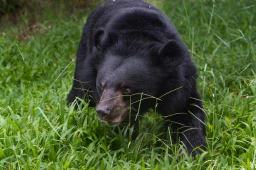 Vietnam has agreed to rescue more than 1,000 bears from illegal farms across the country to end the traditional medicine trade i