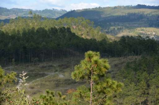 View of the new tree plantations under the supervision of the Forest Sciences University (ESNACIFOR) after the woods had to be c