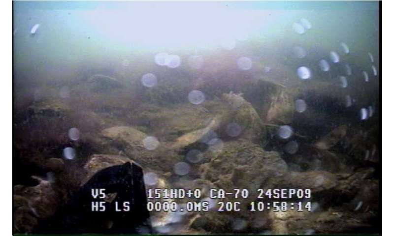 VIMS study identifies tipping point for oyster restoration