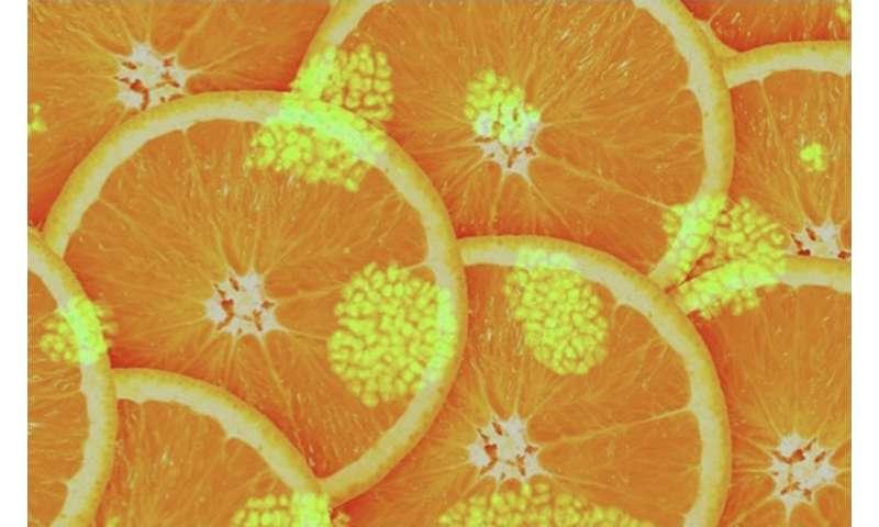 Vitamins and aminoacids regulate stem cell biology