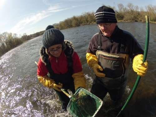 Wastewater treatment upgrades result in major reduction of intersex fish