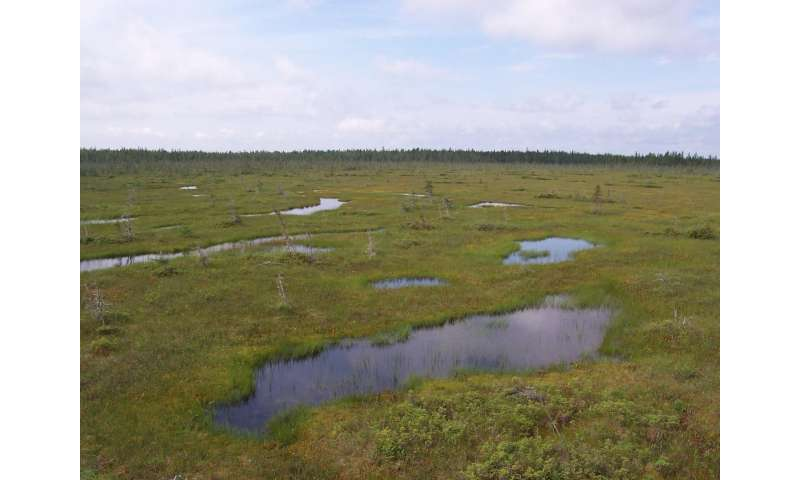 Wetlands play vital role in carbon storage, study finds