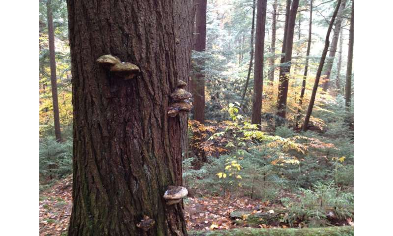 When old growth beats old school