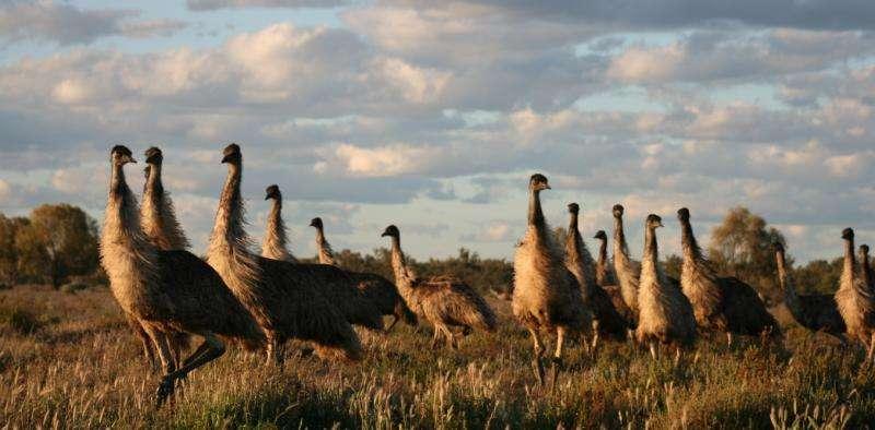 Which native animals should Australians eat?