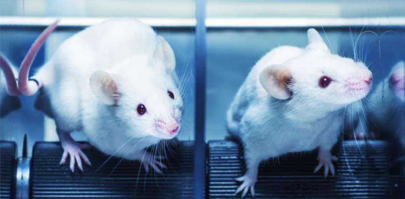 Why animal trial results don't always translate tohumans