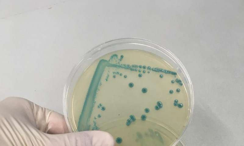 Why some Listeria strains survive good food hygiene standards
