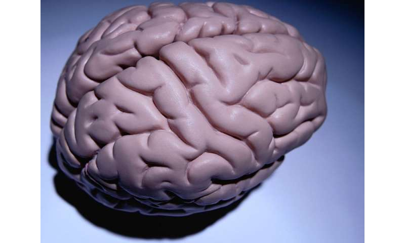 Why teen mental ability surges while brain shrinks