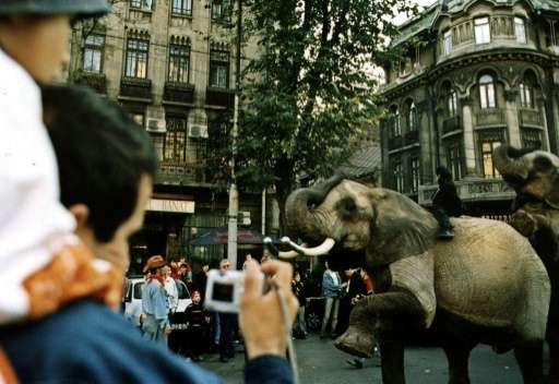 Wild animals, such as elephants, have long been used in circuses in Romania, but will now be banned