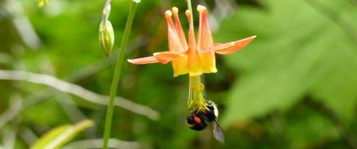 Wild bees thrive after severe forest fires