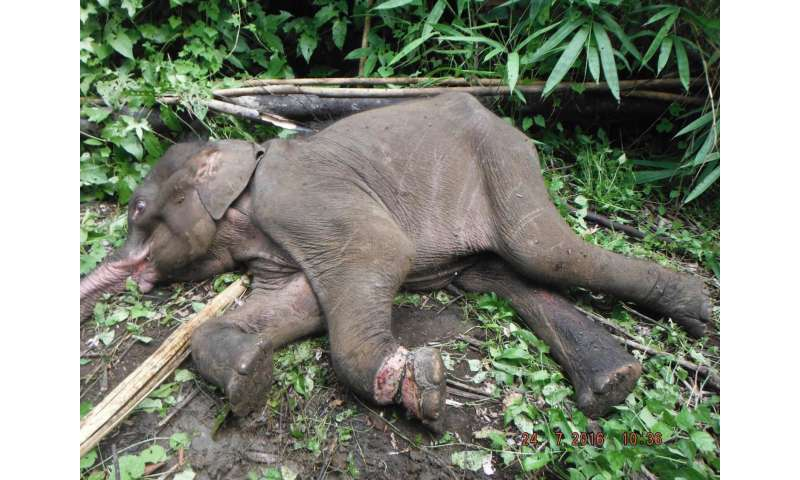 Wildlife-snaring crisis in Asian forests