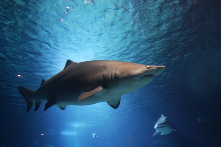 World first trial of shark inspired drug