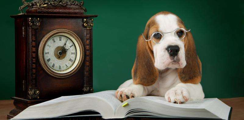 Your dog can remember more than you think