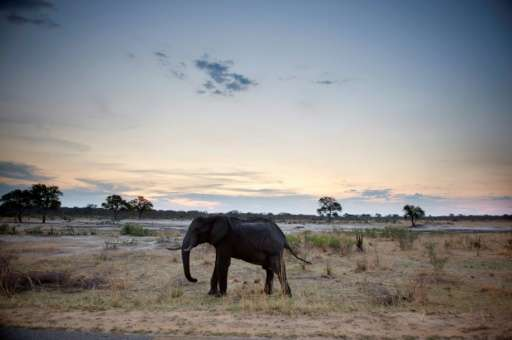 Zimbabwe is to transfer fifty elephants to Mozambique