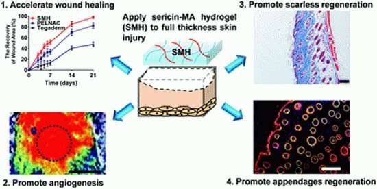 Skin gel allows wounds to heal without leaving a scar