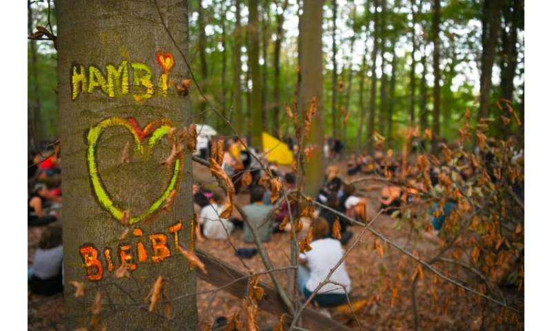 Activists have occupied the ancient forest for six years, their protest a symbol of opposition to dirty coal, and they had cause
