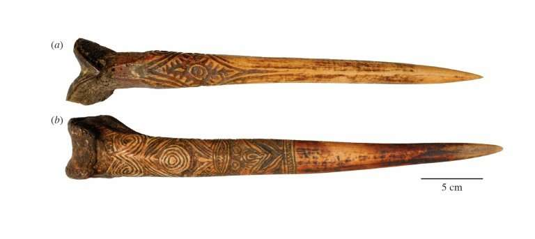A handout picture released from researcher Nathaniel Dominy shows a human thigh bone dagger attributed to the Upper Sepik River