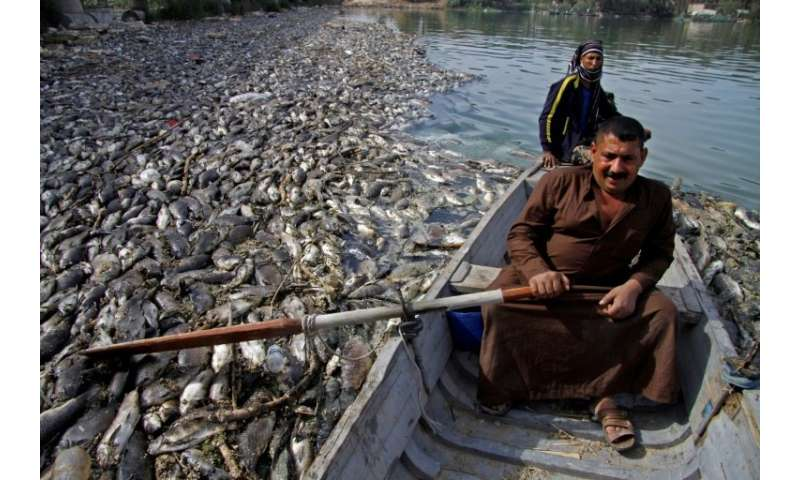 An Iraqi man steers his boat around dead carp floating on the Euphrates River, afer the fish were jettisoned from nearby farms