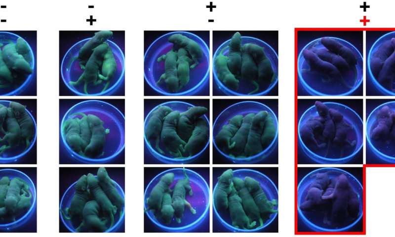 A novel switch to control genome editing