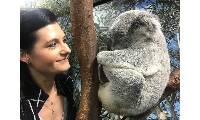 Australian scientists crack the genetic code of koalas