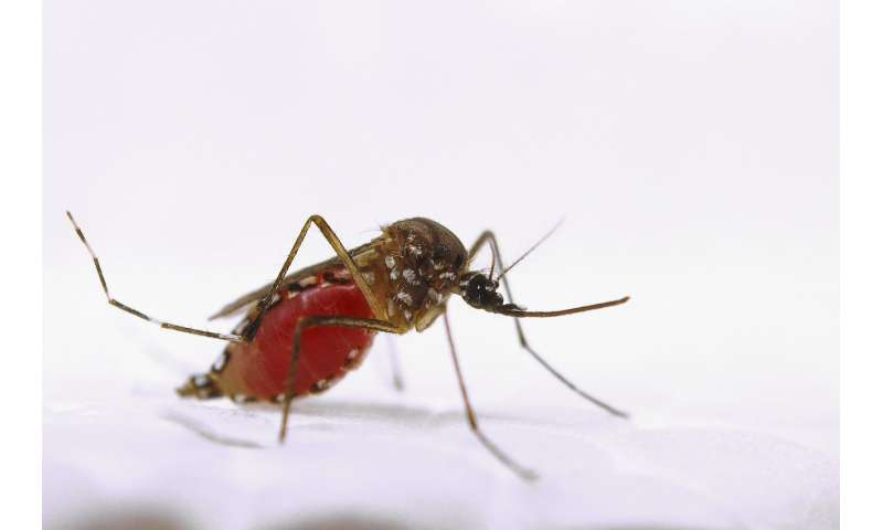 A well-known animal health drug could stop outbreaks of malaria and Zika virus