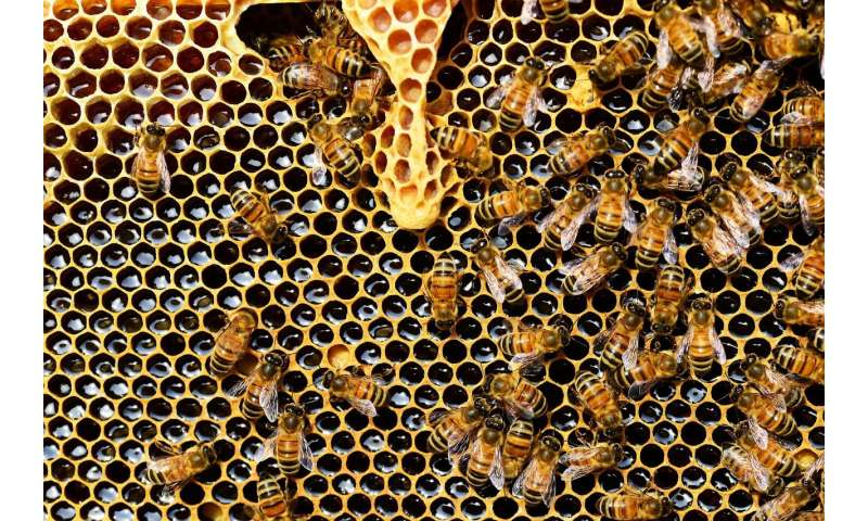 Two pesticides approved for use in US harmful to bees
