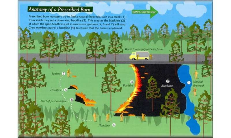Better forest management won't end wildfires, but it can reduce the risks – here's how