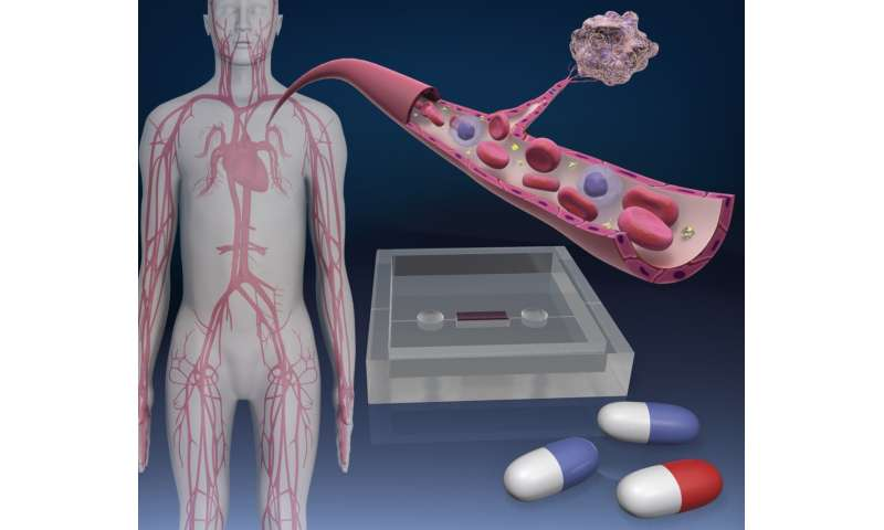 Blood vessel-on-a-chips show anti-cancer drug effects in human cells