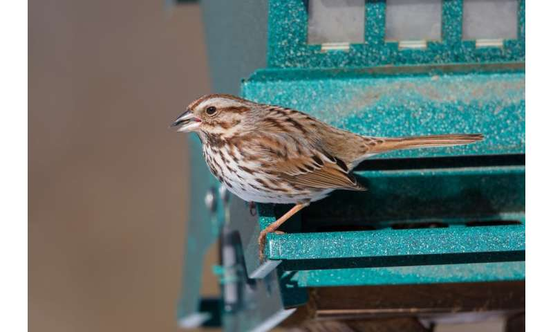 Bold and aggressive behaviour means birds thrive in cities