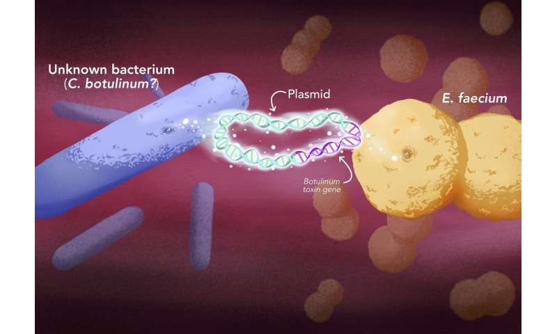 Botulinum-type toxins jump to a new kind of bacteria