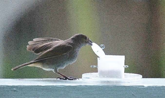Brain genes related to innovation revealed in birds