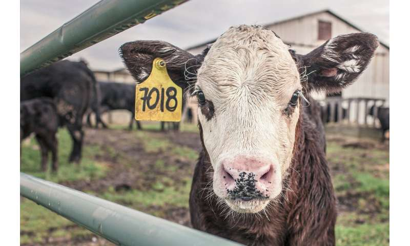 New vaccine will stop the spread of bovine tuberculosis