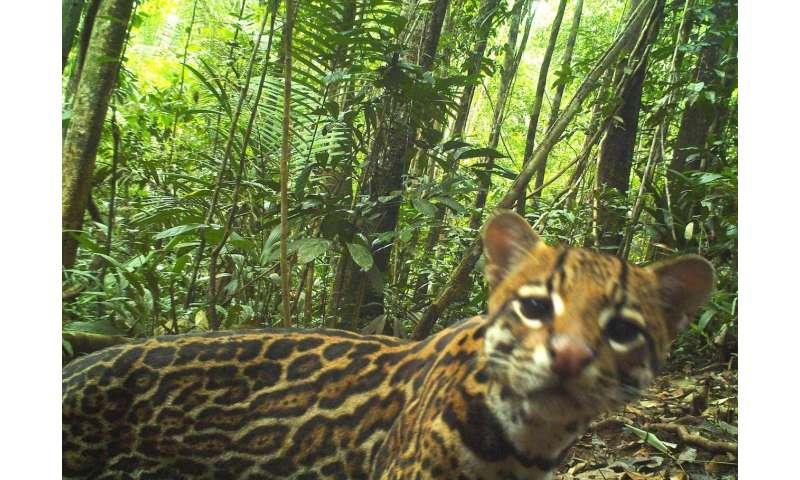 Caught on camera: Amazonian crop raiders