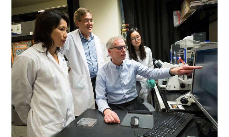 CRISPR opens door to new type of medicine—'genome surgery'