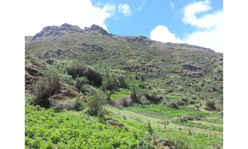 Crop failure in the Andes