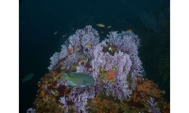 Deepwater corals thrive at the bottom of the ocean, but can't escape human impacts