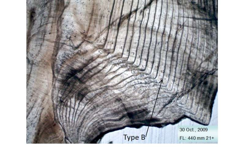 Determining fish age using inner ear structures
