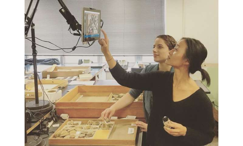 Digitizing the vast 'dark data' in museum fossil collections
