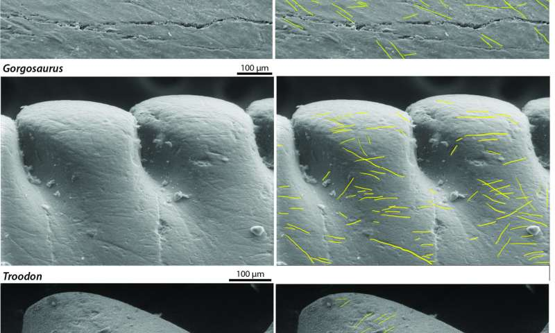 Dinosaurs' tooth wear sheds light on their predatory lives