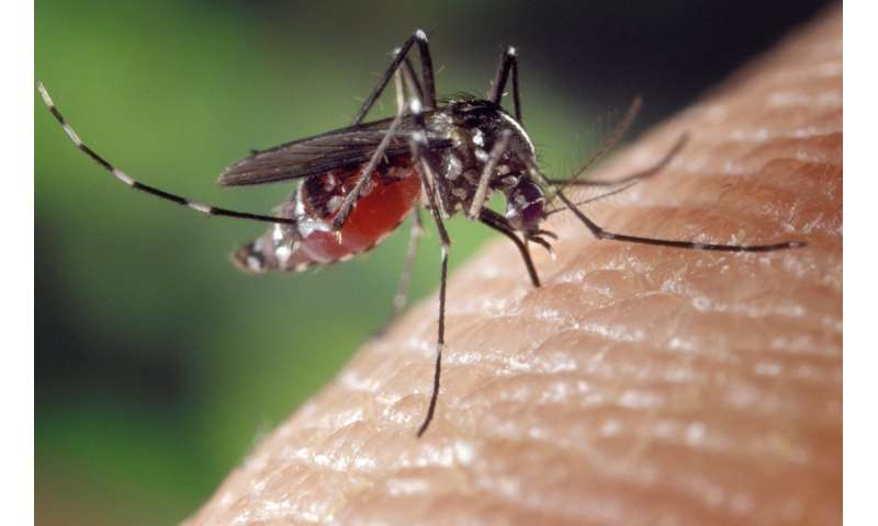 Disappearing mosquitoes leave clues about basic ecology