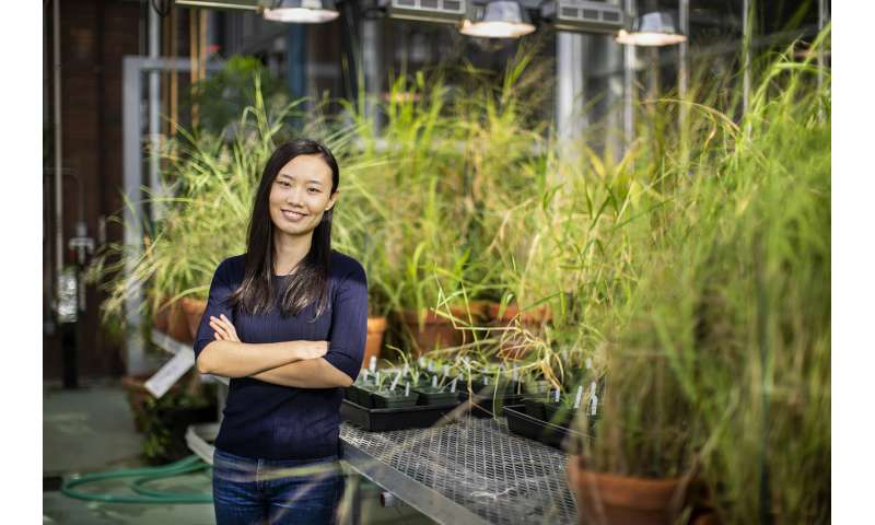 Dry conditions may have helped a new type of plant gain a foothold on Earth