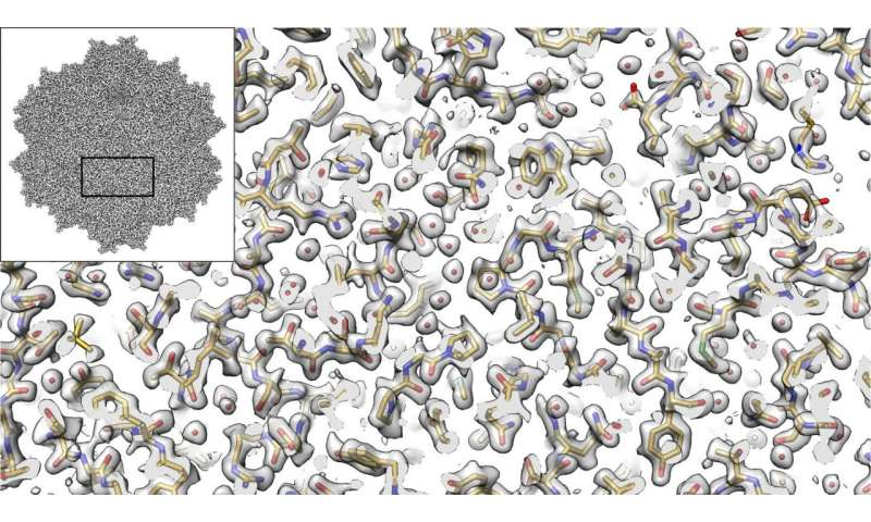 Electron microscopy provides new view of tiny virus with therapeutic potential