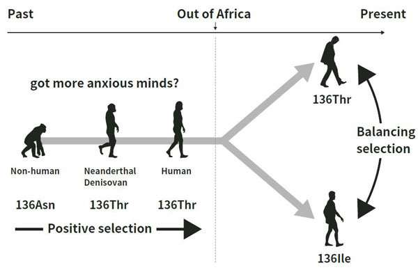 Evolution of psychiatric disorders and human personality traits