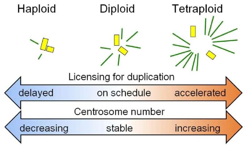 Explaining genome pairs