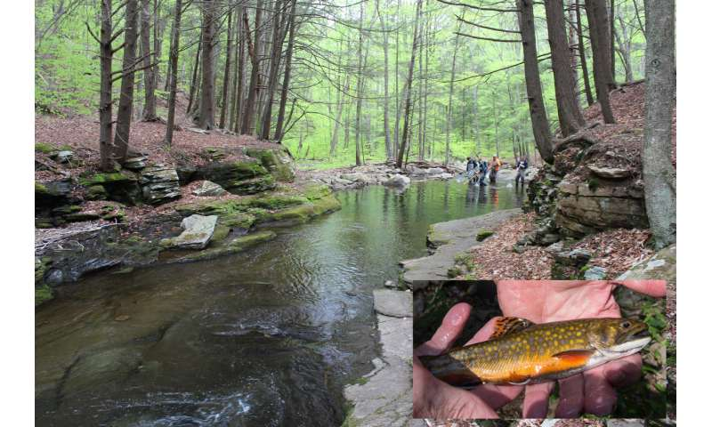Few hatchery brook trout genes present in Pennsylvania watershed wild fish