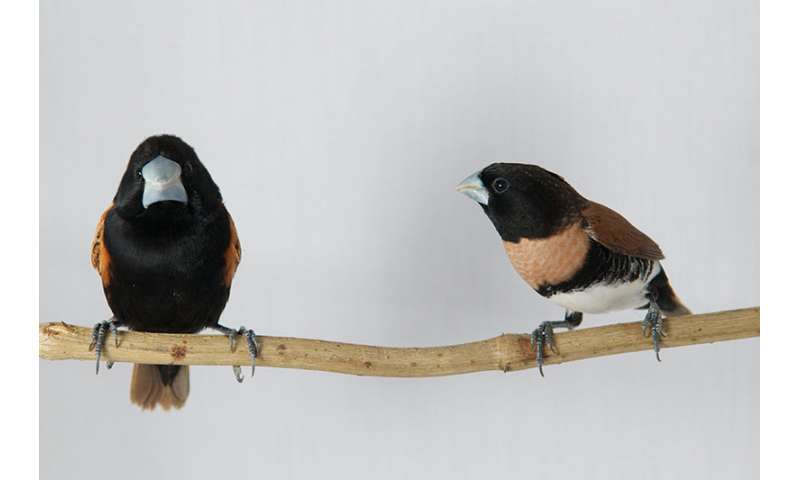 Finches from remote corners of New Guinea help solve an evolutionary puzzle