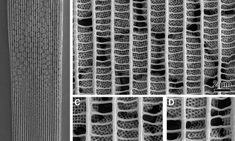 Five ways that natural nanotechnology could inspire human design