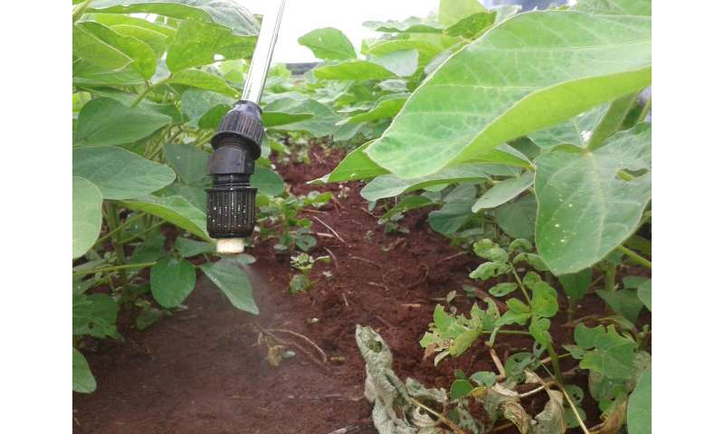 Fixing soybean's need for nitrogen